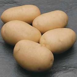 Zemiaky CICERO skoré 25kg