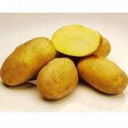 Zemiaky Marabelle skoré 5kg VT -B žlté